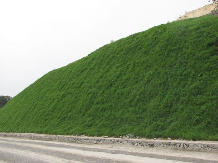 邊坡綠化草種效果1.jpg